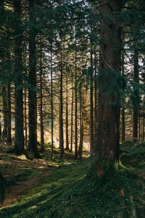Image-66