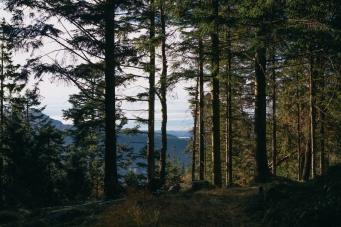 Image-67